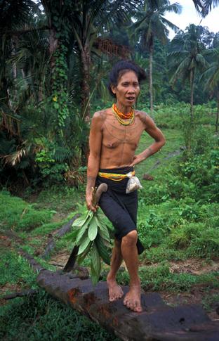 Siberut domorodec