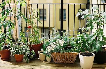 Domácí zelenina a květiny