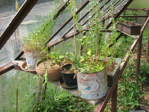 Domácí zelenina ze slkeníku