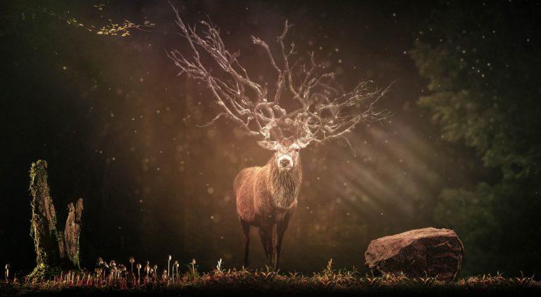 Duchové přírody